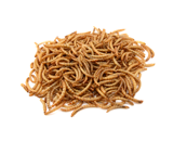 live feeder mealworm